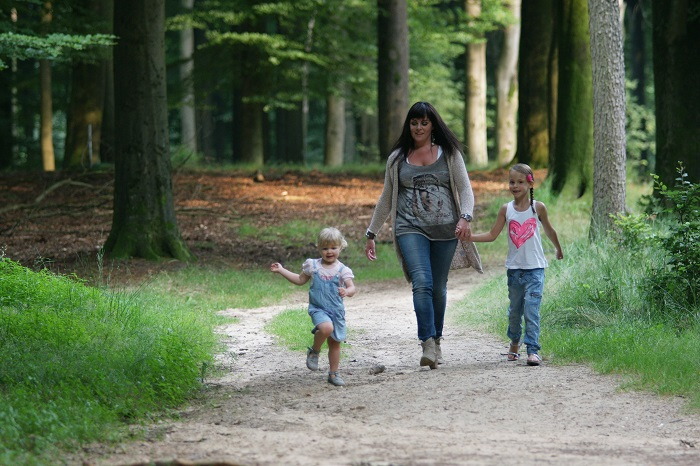 Wandelen in de bossen op de Veluwe
