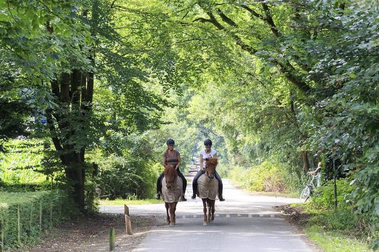 Paardrijden in Garderen op de Veluwe