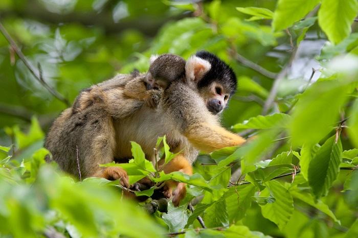 Ontdek alle apen in de Apenheul