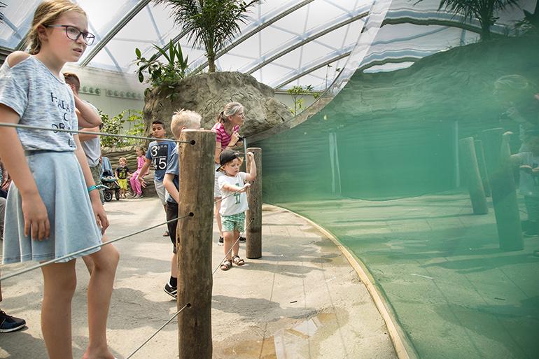 Mangrove in Burgers' Zoo