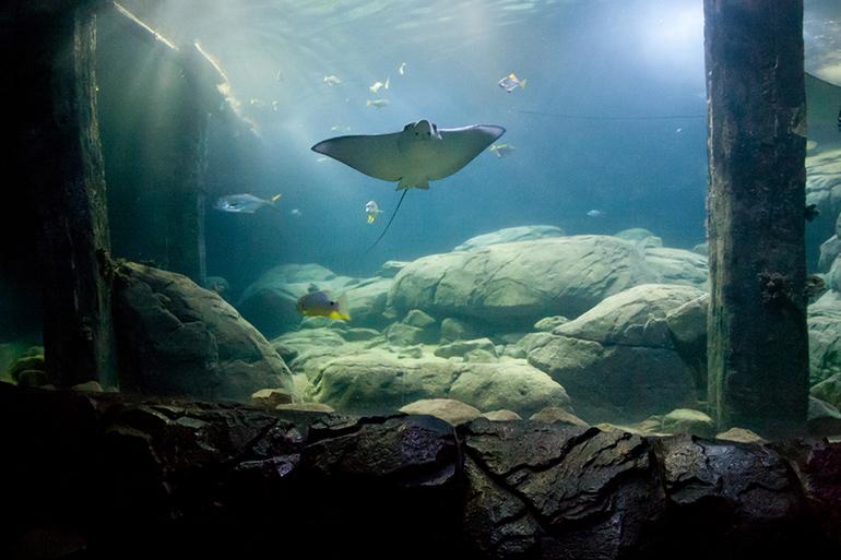 De ocean van Burgers' Zoo